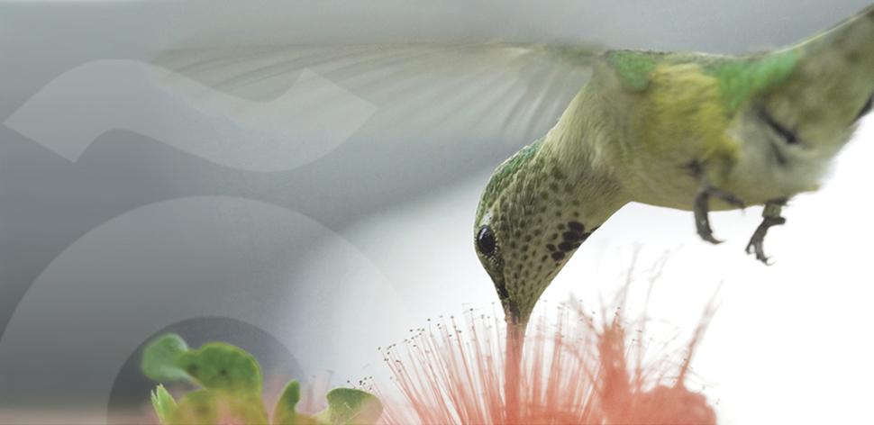 slider-colibri-2-1